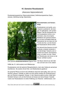 Stauden Dekoration Gewidmet Winterharter Gartenbambus Riesenbambus Bis 20 Meter H.