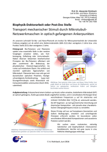 Transport mechanischer Stimuli durch Mikrotubuli