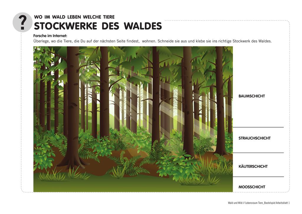stockwerke des waldes - Rund um Wald und Holz
