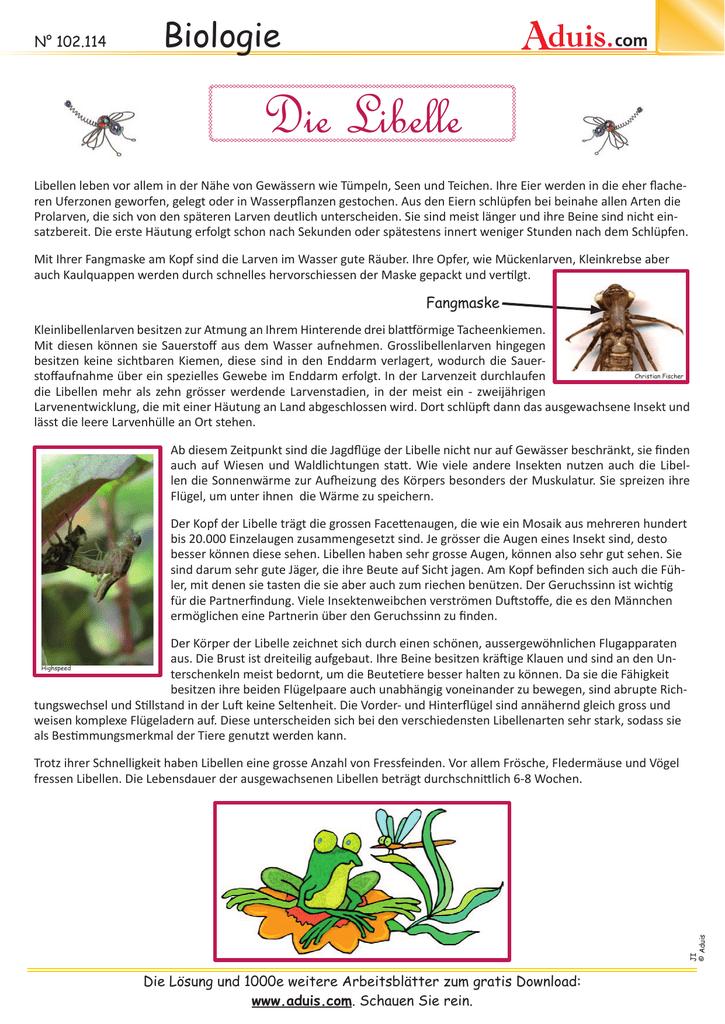 Die Libelle (ab 10 Jahre)