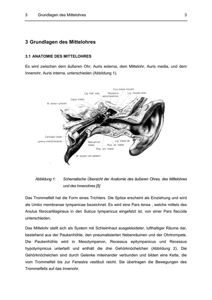 3 Grundlagen des Mittelohres
