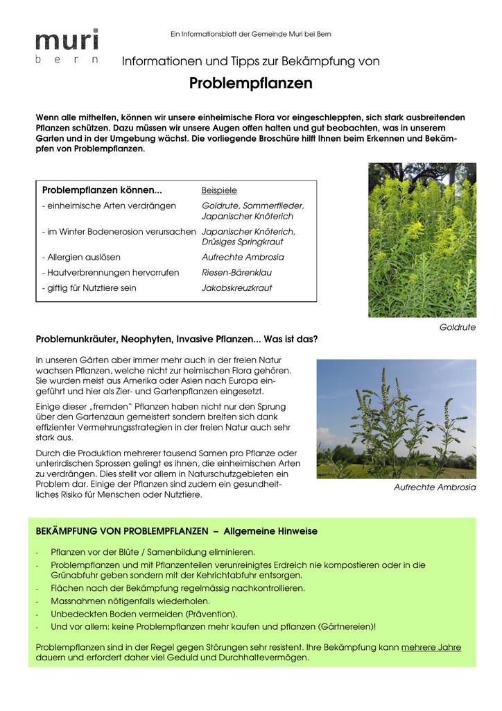 problempflanzen - Einkeimblattrige Pflanzen Beispiele