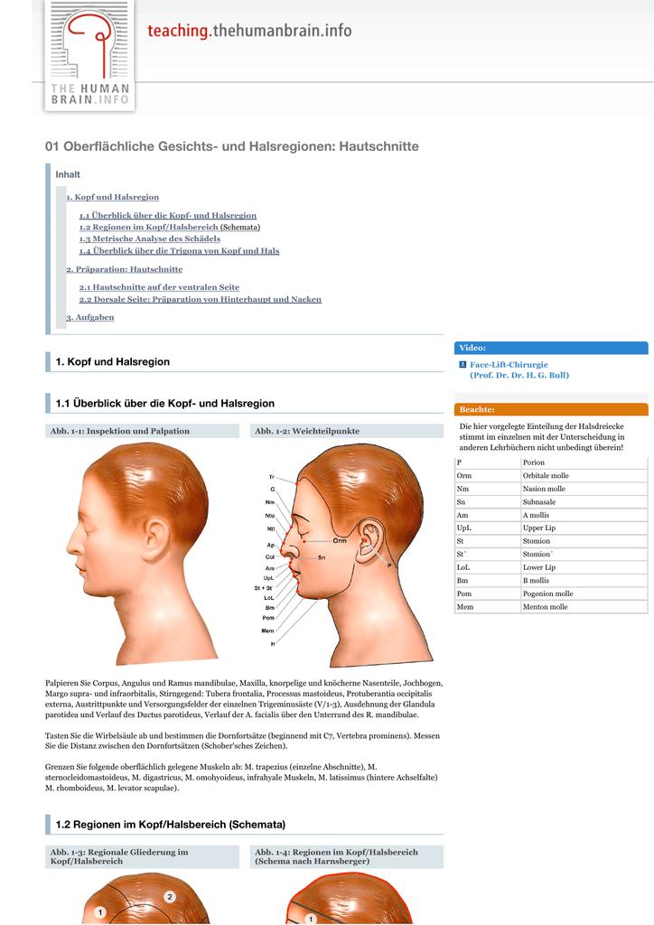 01 Oberflächliche Gesichts- und Halsregionen_ Hautschnitte