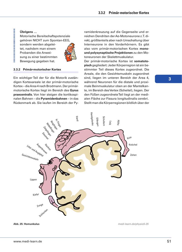 51 3.3.2 Primär-motorischer Kortex - Medi