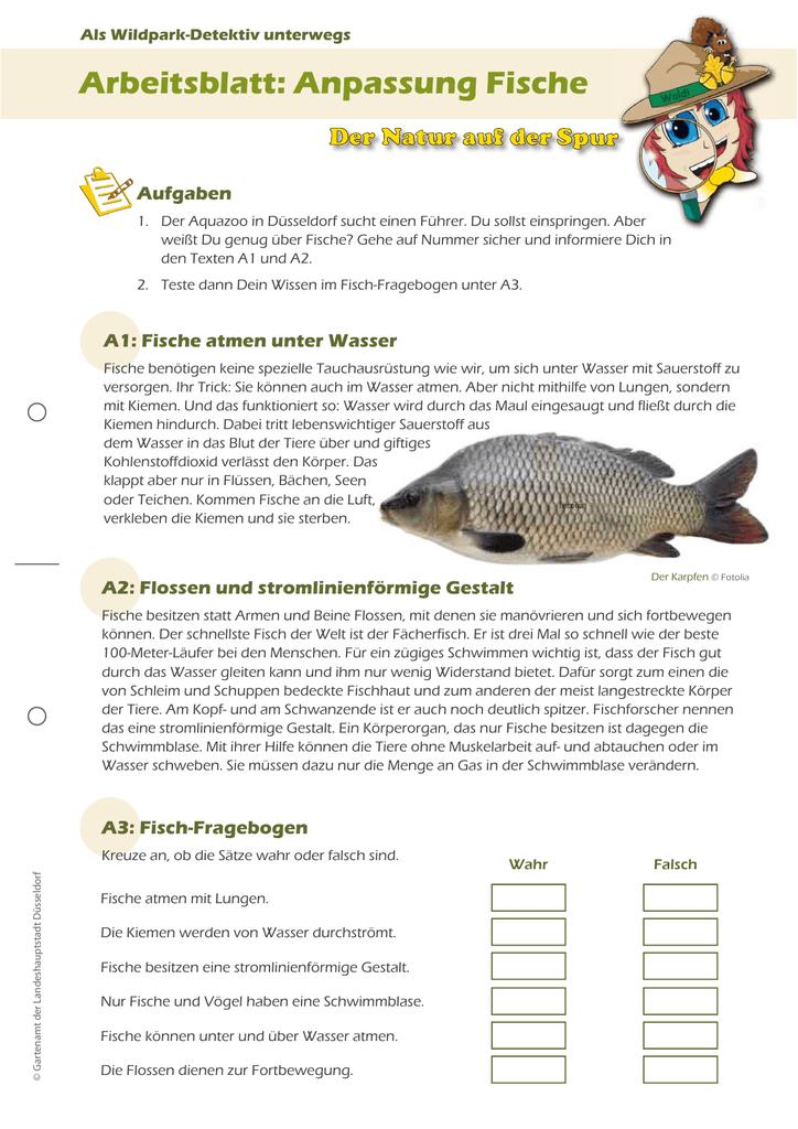 Arbeitsblatt: Anpassung Fische