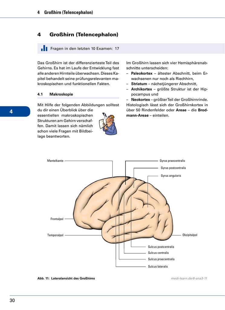 Wunderbar Das Großhirn Bilder - Anatomie Von Menschlichen ...