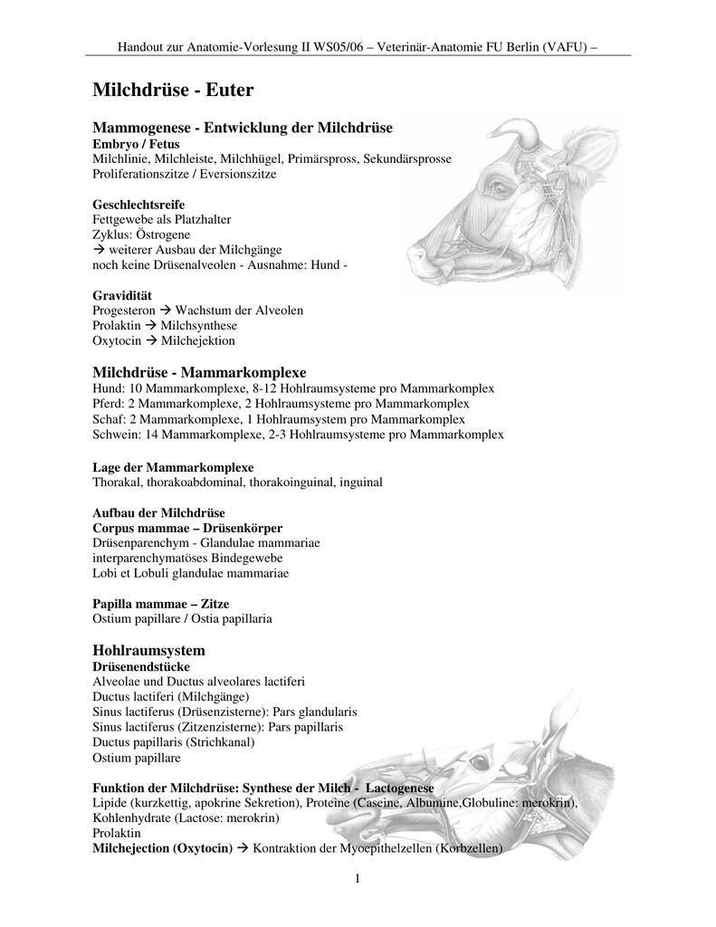 Berühmt Schwein Fötus Anatomie Zeitgenössisch - Anatomie Ideen ...