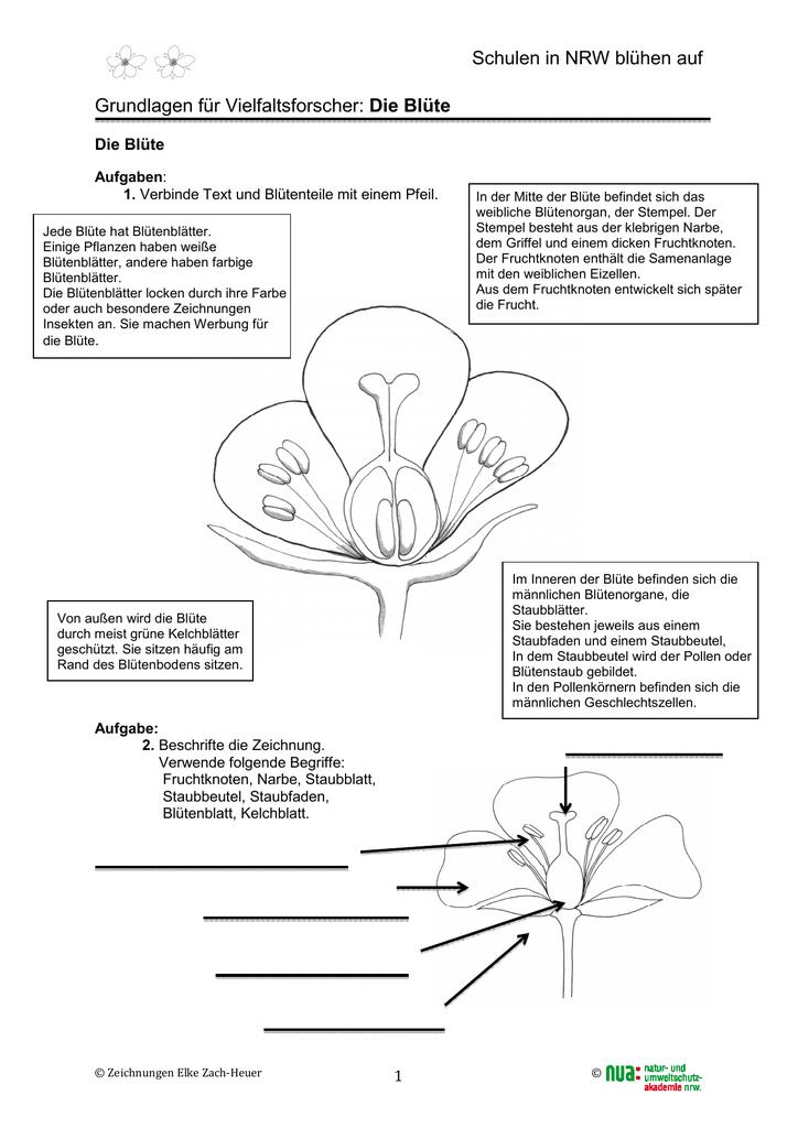 Die Blüte2