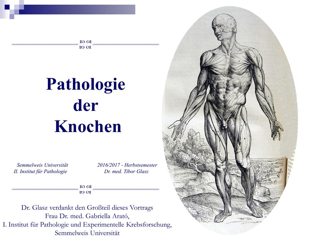 Groß Anatomie Des Langen Knochens Fotos - Anatomie Ideen - finotti.info
