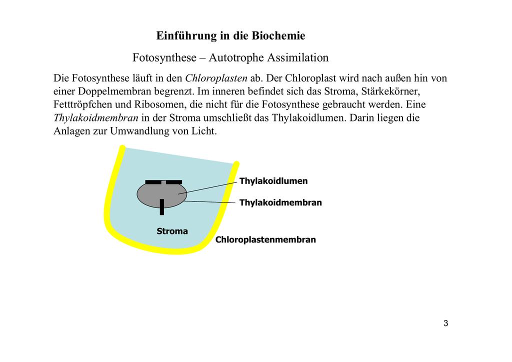 autotrophe assimilation