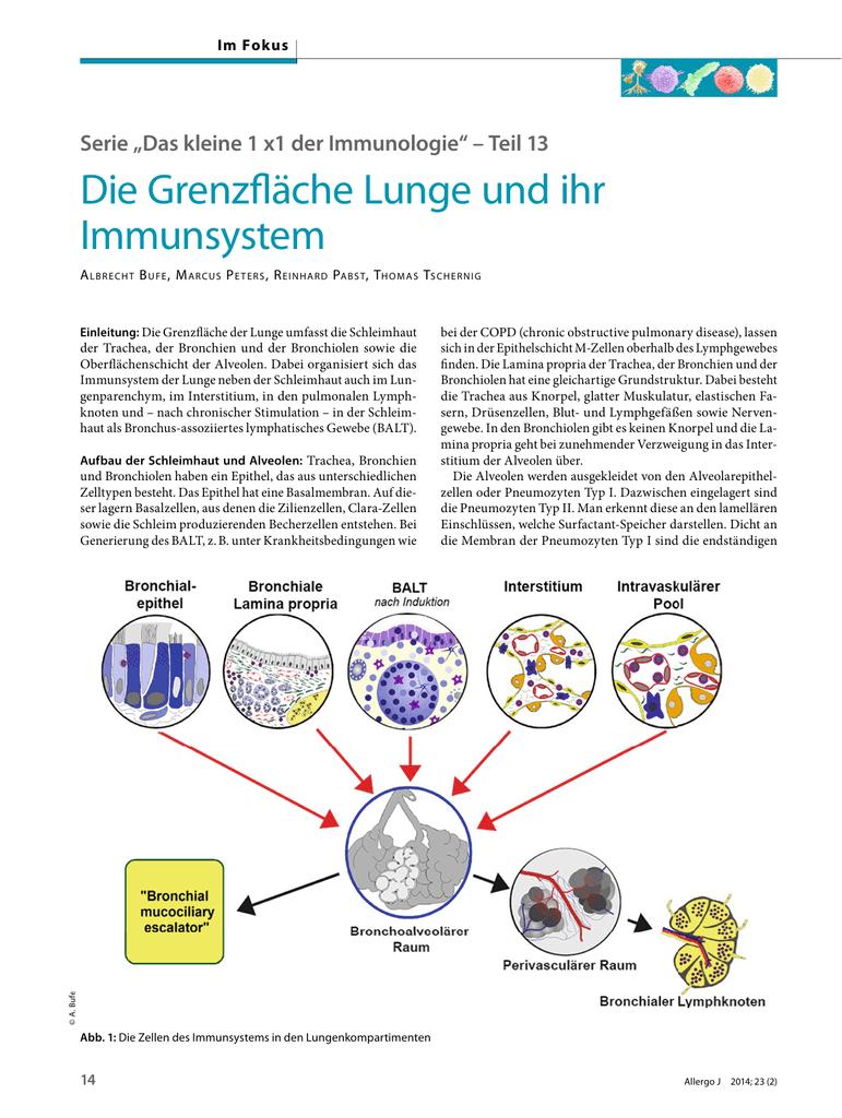 Schön Was Ist Die Funktion Der Lymphknoten Zeitgenössisch ...