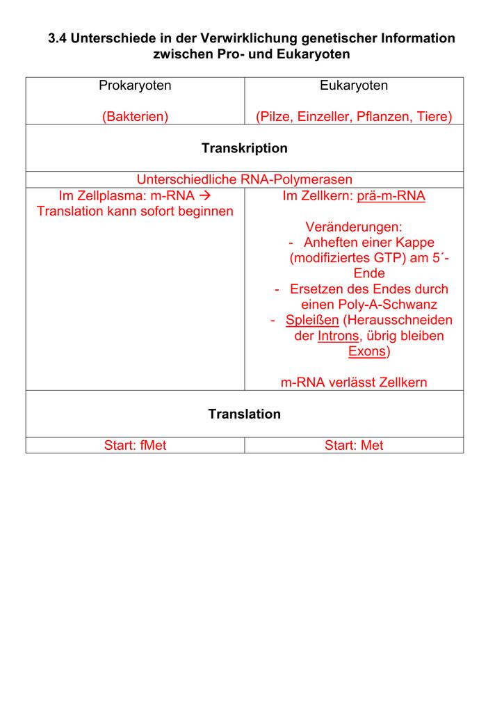 Groß RNAund Transkription Arbeitsblatt Fotos - Mathe Arbeitsblatt ...