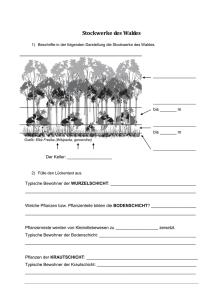 Stockwerke Des Waldes Rund Um Wald Und Holz