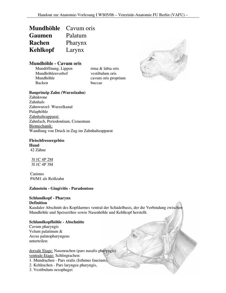 Mundhöhle, Gaumen und Rachen, Kehlkopf