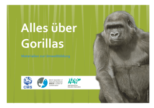 über Gorillas - World Association of Zoos and Aquariums