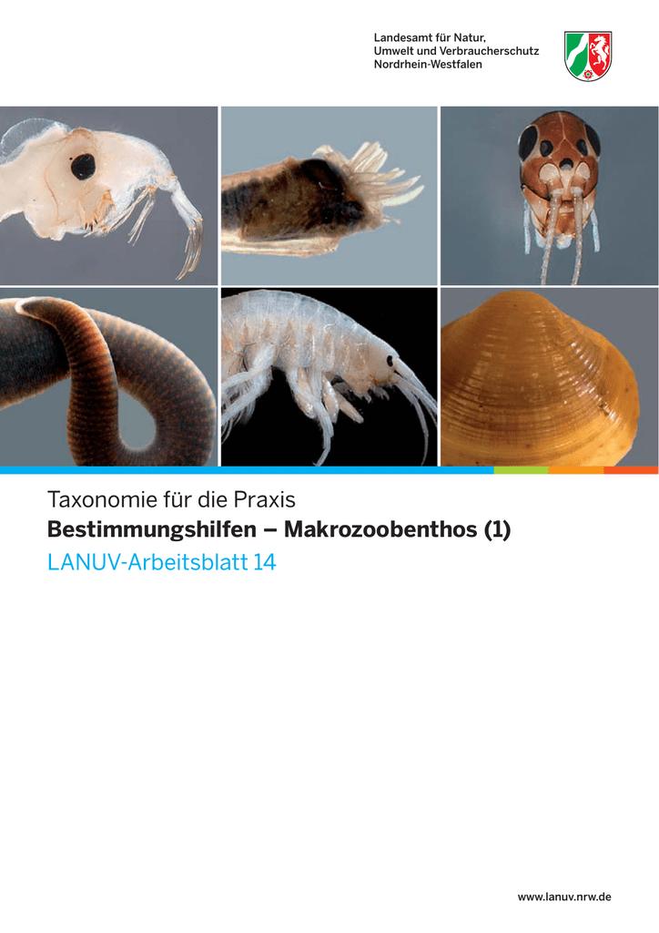 LANUV-Arbeitsblatt 14