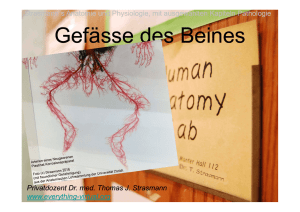 Gefässe des Beines - everything