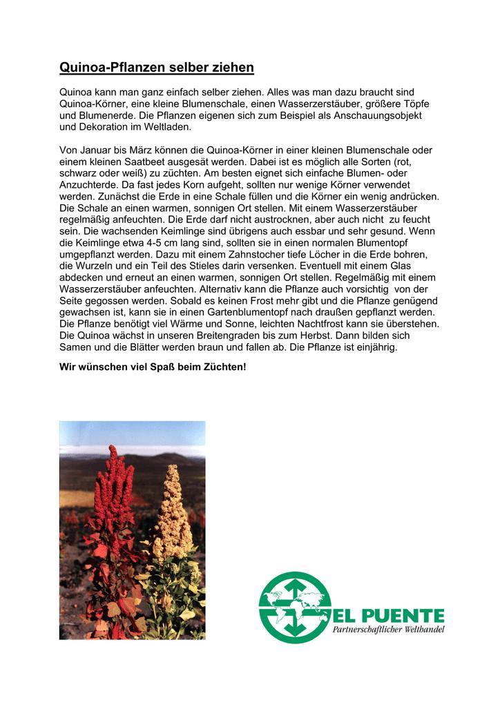 quinoa pflanzen selber ziehen - Einkeimblattrige Pflanzen Beispiele
