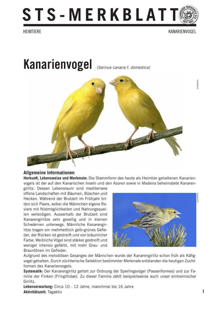 Sts Merkblatt Merkblatt Kanarienvogel Kanarienvogel Sts Sts FKlTJ31c