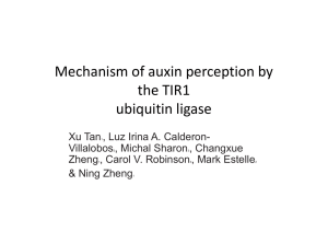 Mechanism of auxin perception by the TIR1 TIR1 ubiquitin ligase q g