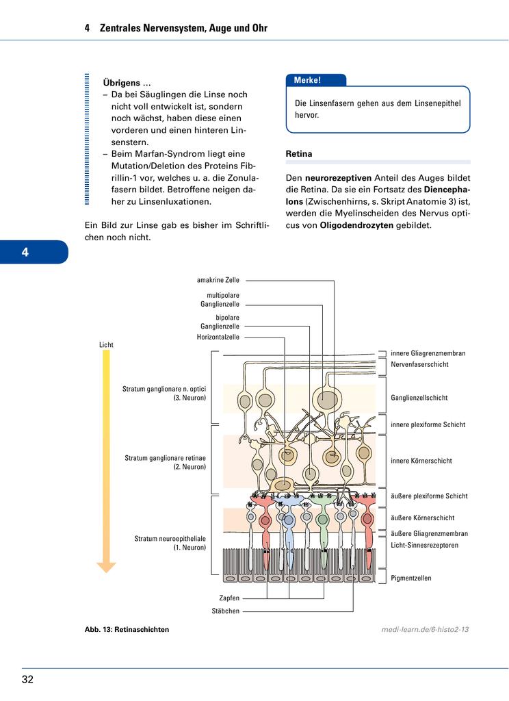 Schön Anatomie Der Linse Fotos - Menschliche Anatomie Bilder ...