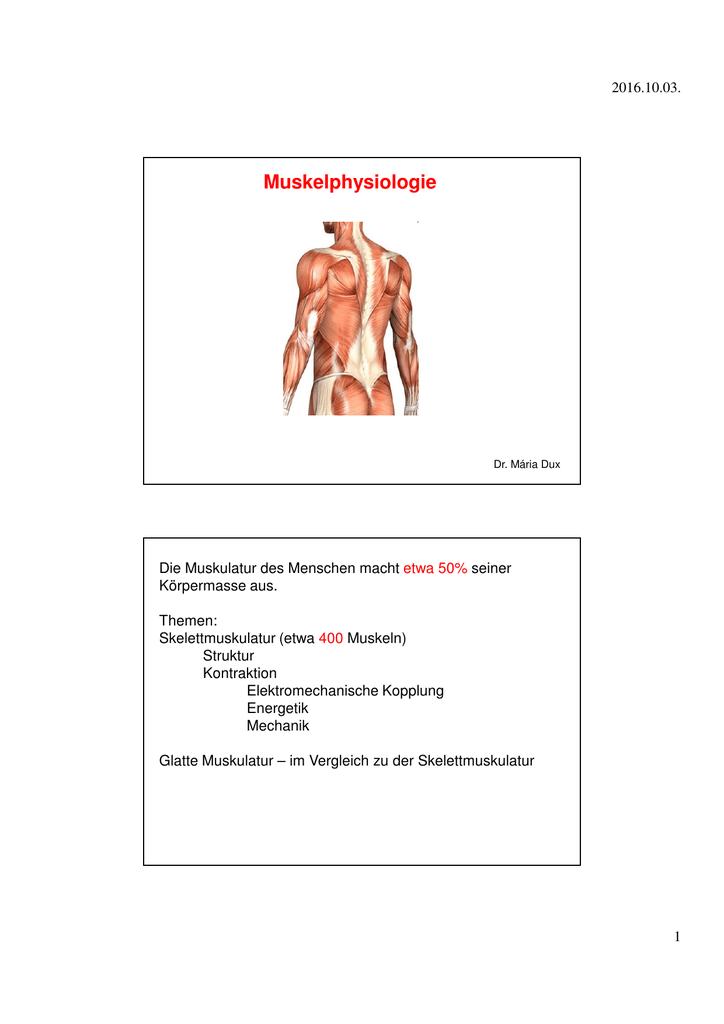 Fein Anatomie Der Glatten Muskulatur Galerie - Anatomie Ideen ...