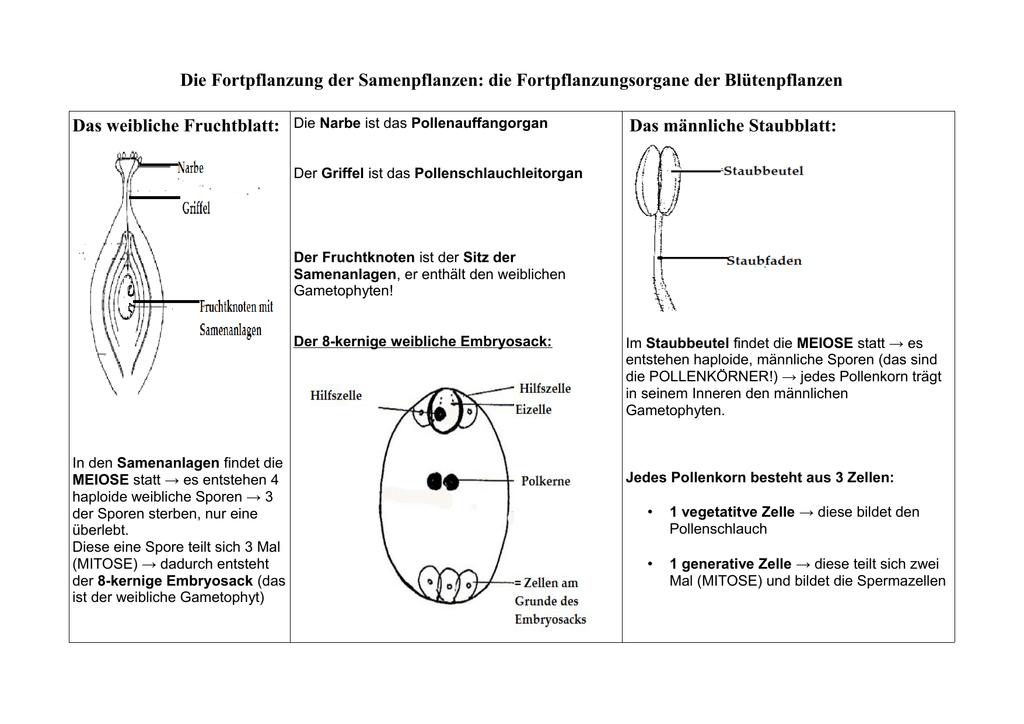Berühmt Anatomie Des Männlichen Fortpflanzungs Galerie - Menschliche ...