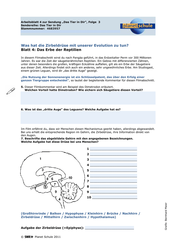 Attractive Mechanismen Der Evolution Arbeitsblatt Illustration ...