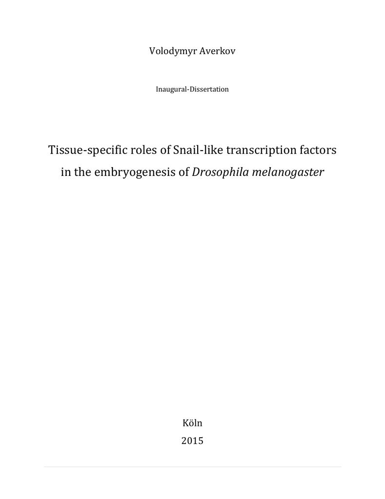 thesis anmeldung hs rm