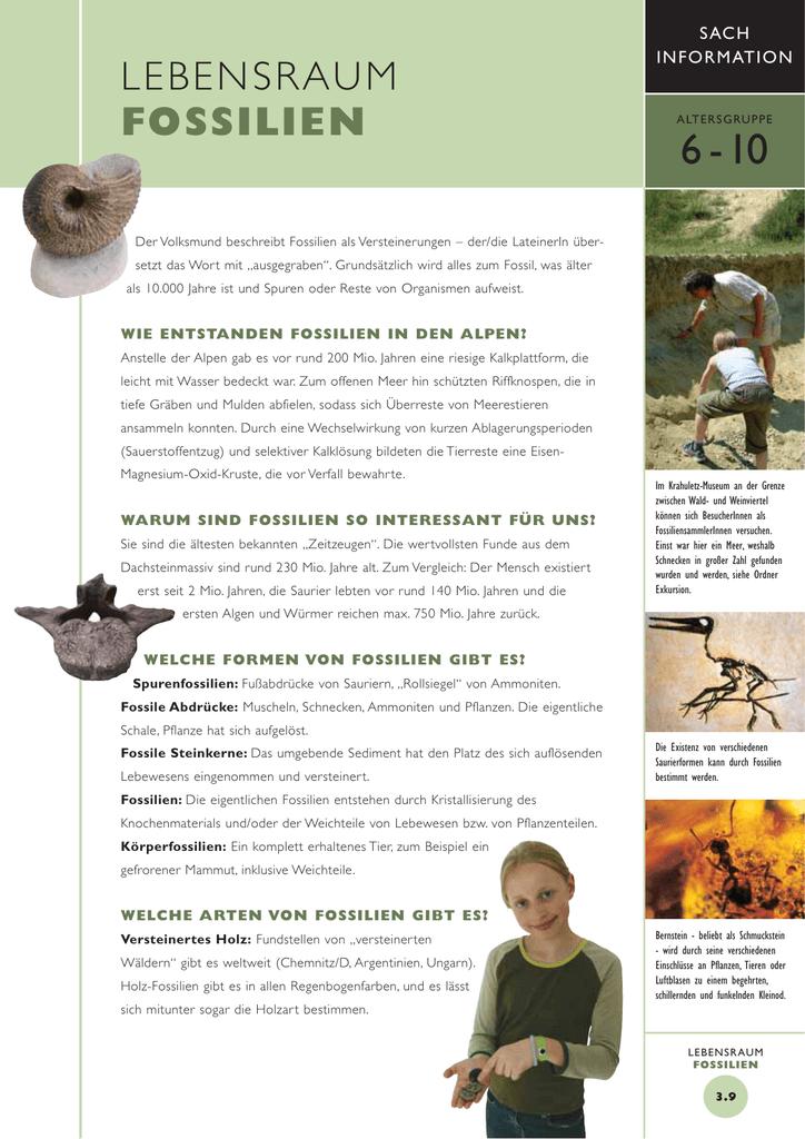 Tolle Fossil Arbeitsblatt Fotos - Arbeitsblätter für Kinderarbeit ...