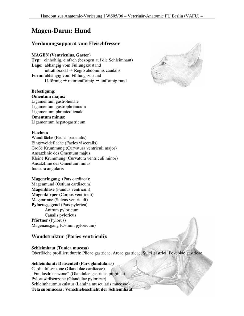 Schön Magen Bilder Anatomie Ideen - Menschliche Anatomie Bilder ...
