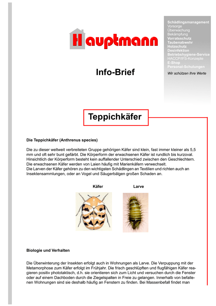Teppichkafer Hauptmann Gmbh