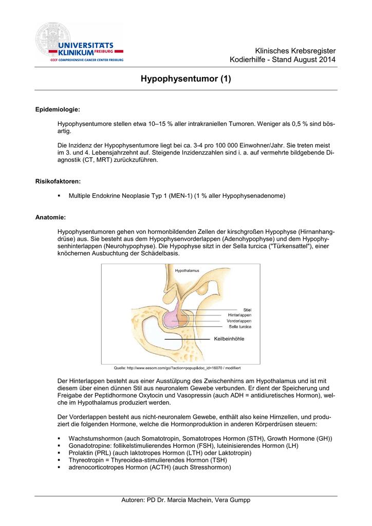 Niedlich Die Hypophyse Bilder - Menschliche Anatomie Bilder ...