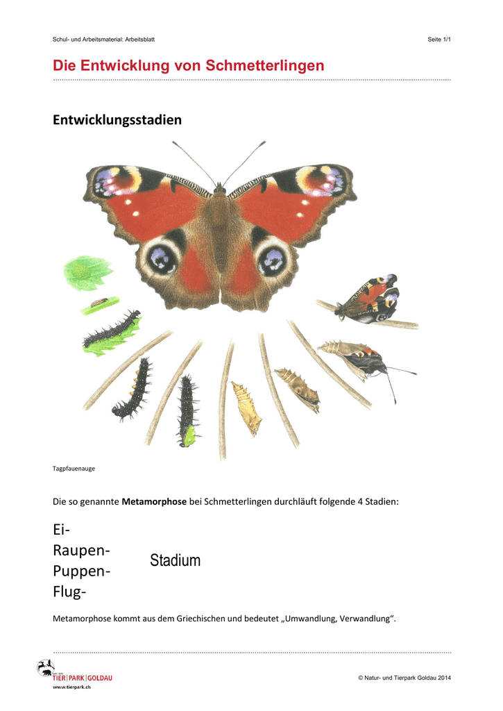 Charmant Schmetterling Zyklus Arbeitsblatt Fotos - Super Lehrer ...
