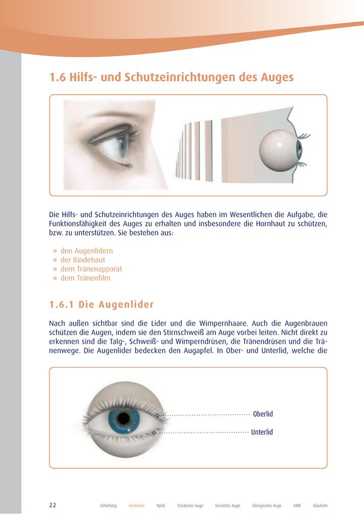 Wunderbar Außen Auge Anatomie Bilder - Menschliche Anatomie Bilder ...