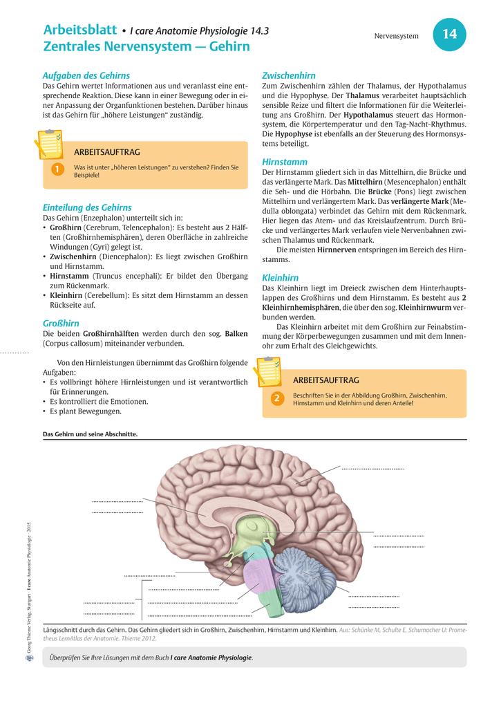 14.3 ZNS Gehirn