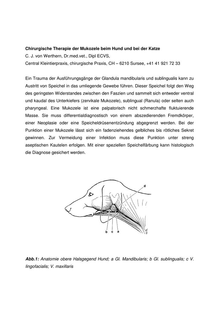 Schön Anatomie Praxis Testfragen Ideen - Anatomie Von Menschlichen ...