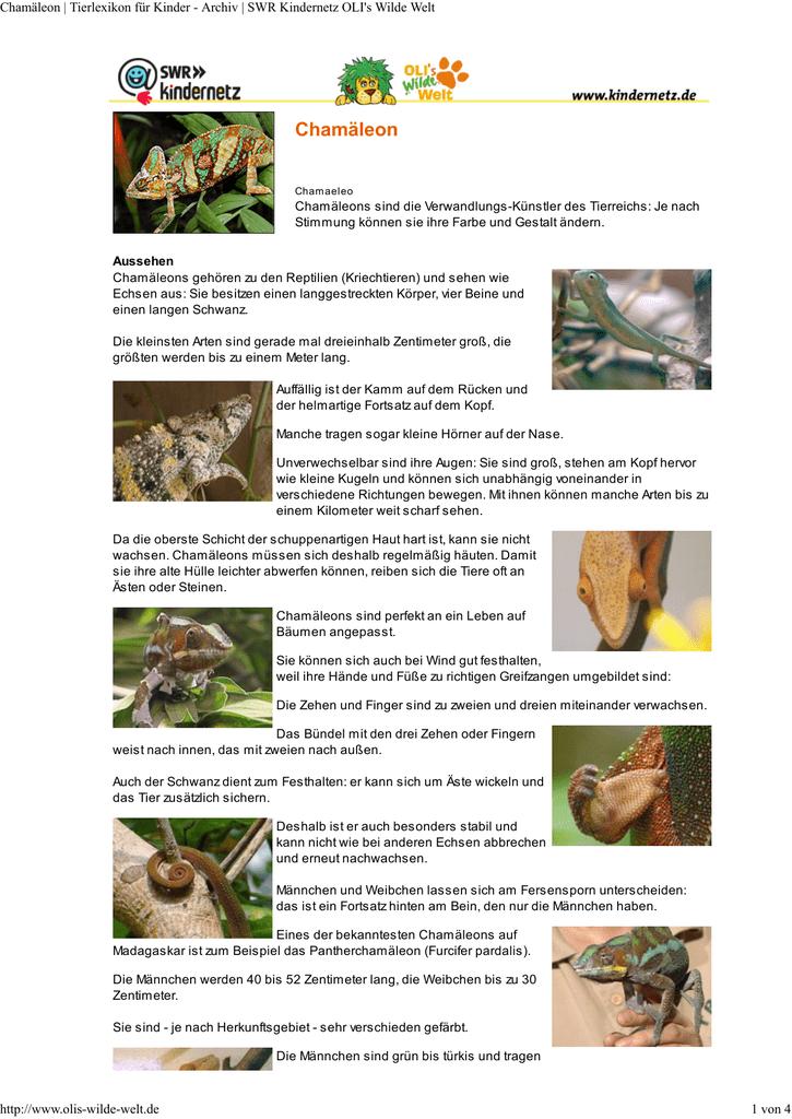Ziemlich Bilder Um Tiere Zu Färben Fotos - Druckbare Malvorlagen ...
