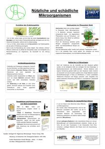 Nützliche Bakterien Liste