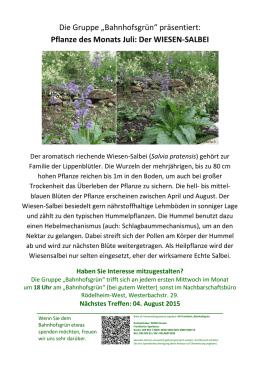 der wiesen salbei - Einkeimblattrige Pflanzen Beispiele