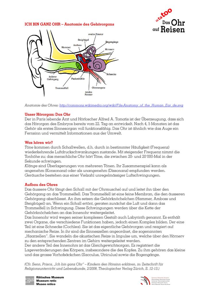 ICH BIN GANZ OHR – Anatomie des Gehörorgans Unser Hörorgan