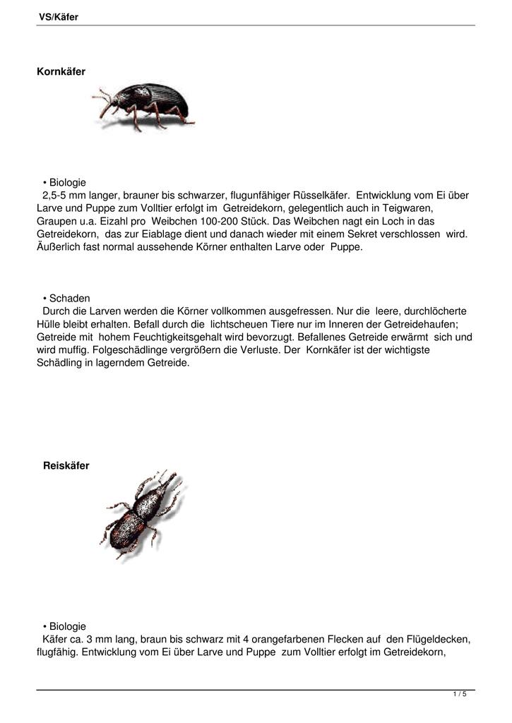 Schwarzer langer käfer