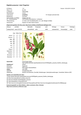 Digitalis purpurea / roter Fingerhut