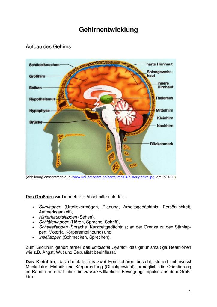 Großartig Alle Teile Des Gehirns Fotos - Menschliche Anatomie Bilder ...
