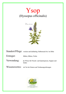 (Hyssopus officinalis)