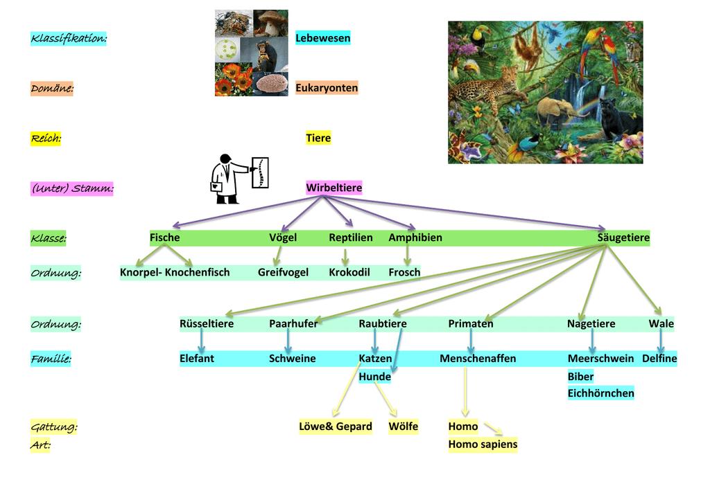 Stammbaum Vögel