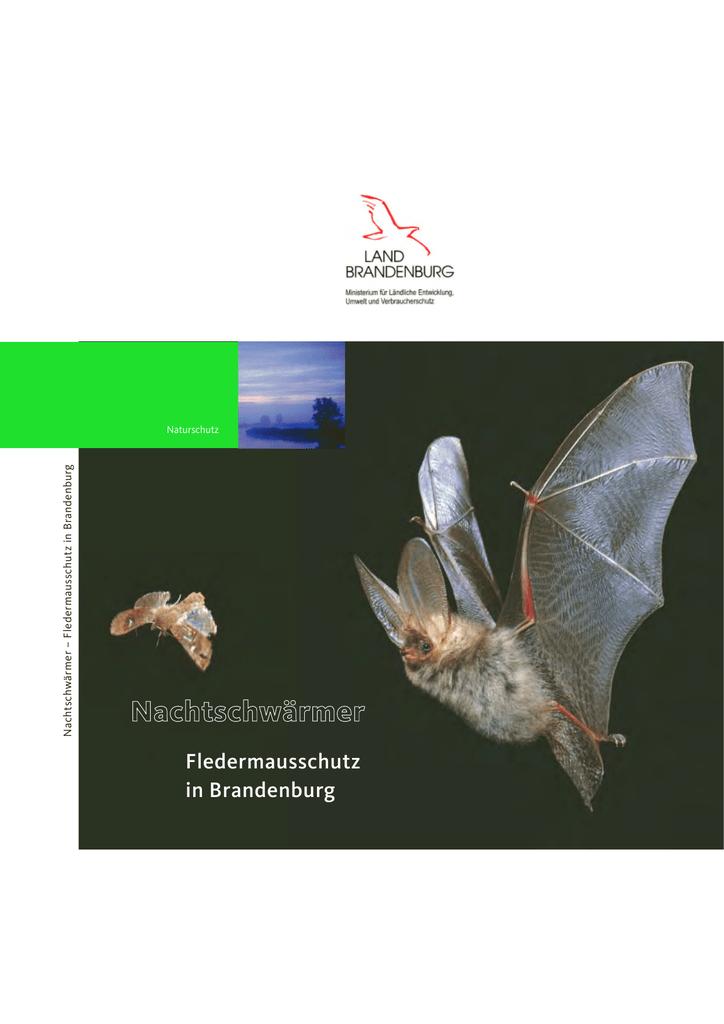Nachtschwärmer - Fledermausschutz in Brandenburg