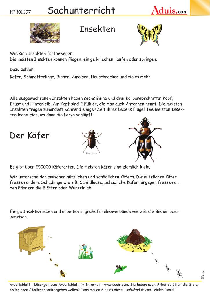 Perfect Arbeitsblatt Auf Insekten Für Kindergärten Embellishment ...