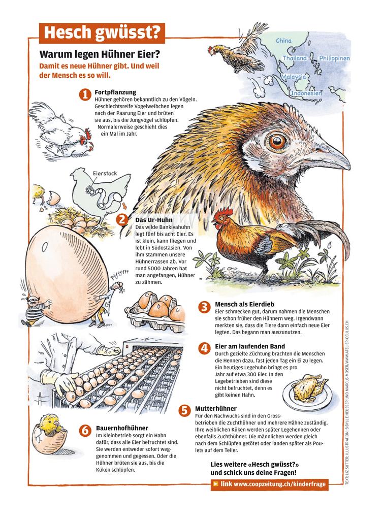 Prächtig Ei (von Hühnern) #CD_27