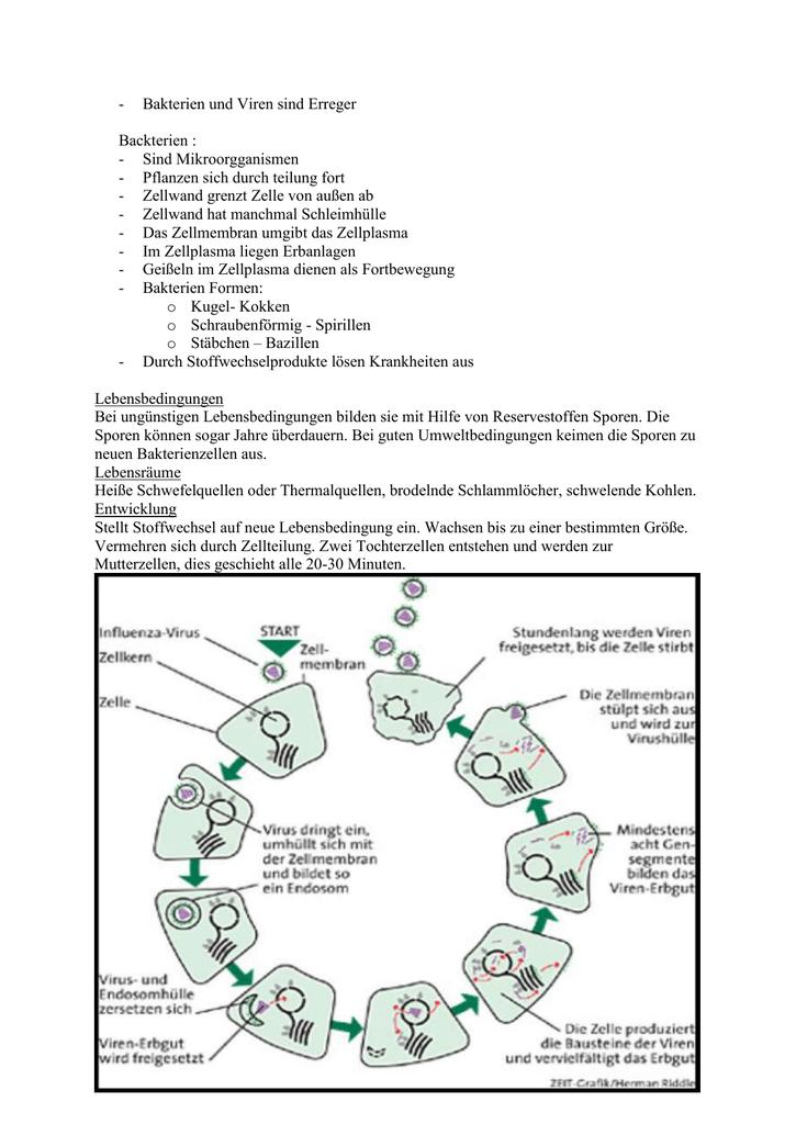 krankheiten durch bakterien